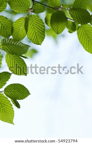 Beautiful, harmonious forest detail, with hornbeam leaves - stock photo