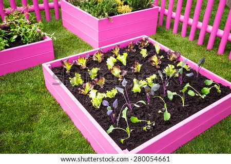 Beautiful herb garden. Pink raised beds with herbs and vegetables. Trendy garden design - stock photo