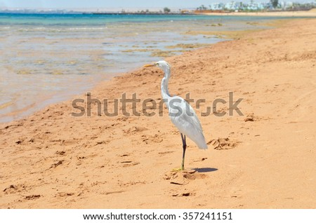 Beautiful Heron on the sandy shores of the azure sea. - stock photo
