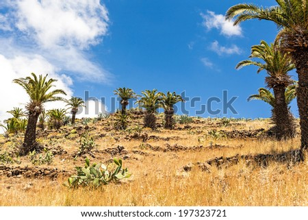 Beautiful hiking mountains landscape yellow meadow, blue sky clouds and palm trees, Canary Islands La Gomera, Spain - stock photo