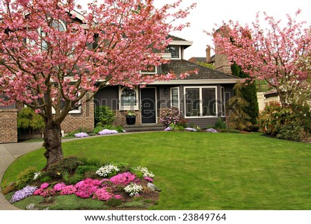 Beautiful home with blossoming cherry trees. - stock photo