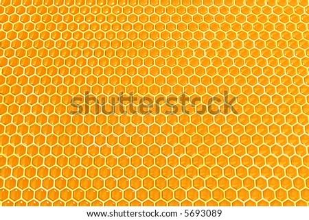 beautiful honey cells - stock photo