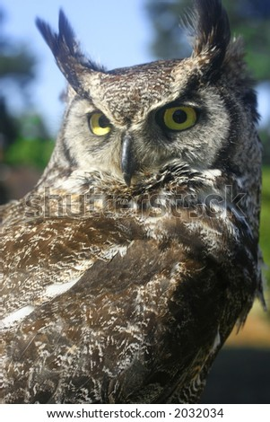 Beautiful horned owl perched on a stand. - stock photo