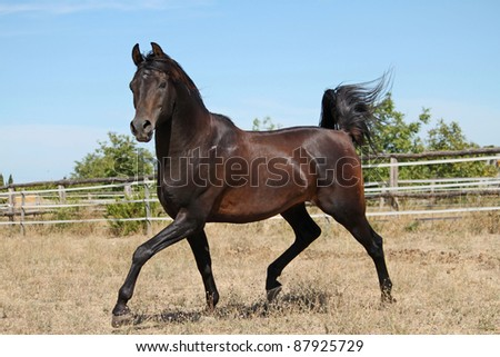 beautiful horse - stock photo