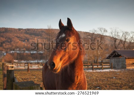 Beautiful horse grazing at sunset with sunlight and farm on background - stock photo