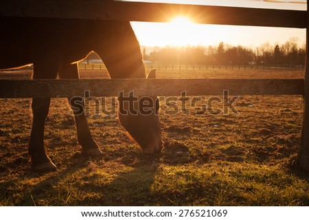 Beautiful horse grazing at sunset with sunlight and wooden fence - stock photo