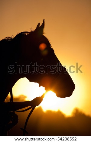 Beautiful horse head - stock photo