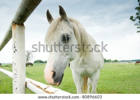 Beautiful Horse in a Green Meadow in sunny day - stock photo
