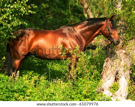 beautiful horse in verdure