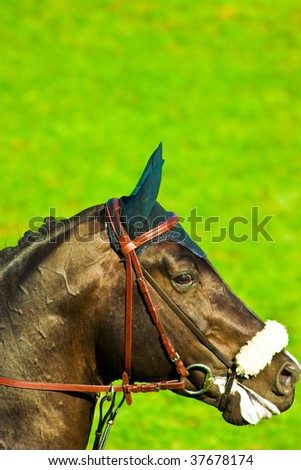 beautiful horse jumping the barrier at the equestrian events - stock photo