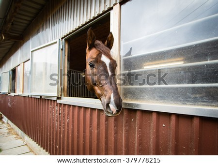 Beautiful horse looking out of the stable window, selective focus