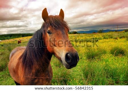 Beautiful horse on Scottish meadow - stock photo