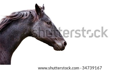 Beautiful Horse on white background - stock photo