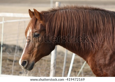 Beautiful horse outdoor on meadow. Western riding horse from farm. Horse with interesting color. Lovely and cute horse. Horse breed for western or jumping sport. Animal shot capturing horse. - stock photo