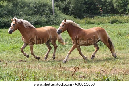 Beautiful horse outdoor on meadow.Western riding horse from farm.Horse with interesting color.Lovely and cute horse. Horse breed for western or jumping sport and training. Animal shot capturing horse. - stock photo