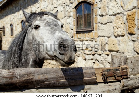 beautiful horse outdoors - stock photo