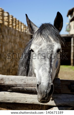 beautiful horse outdoors, close-up - stock photo