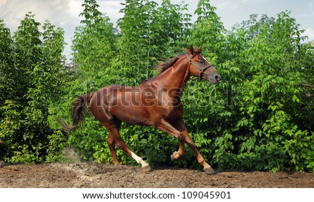 Beautiful horse running in farm