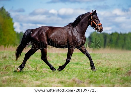 beautiful horse running on a field - stock photo