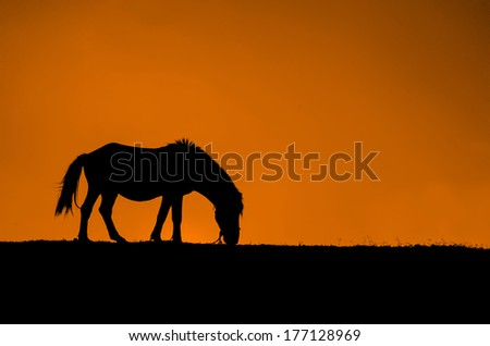 Beautiful horse silhouette in sunset - stock photo