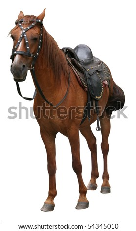 beautiful horse standing on white background - stock photo