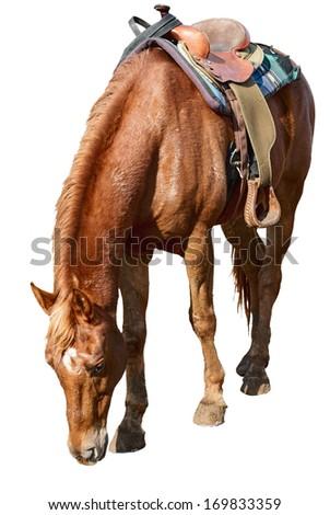 beautiful horse with a saddle on a farm - stock photo