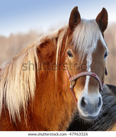 Beautiful horse - with sky and brown forest as background - stock photo