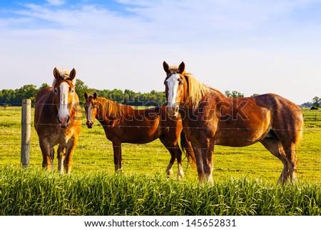 Beautiful horses during sunset - stock photo