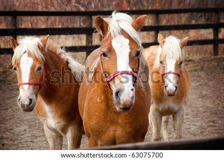 Beautiful horses family posing to the camera - stock photo