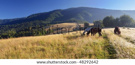 beautiful horses grazing in a field
