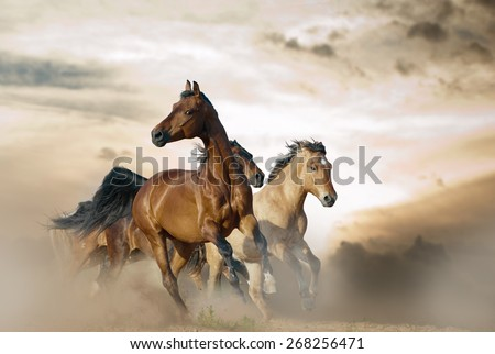 Beautiful horses of different breeds running in dust on sunset - stock photo