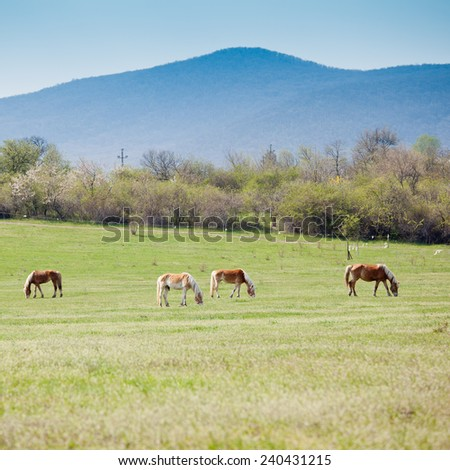 Beautiful horses on a meadow - stock photo