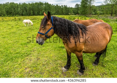 Beautiful horses on rural farm with green grass, country landscape