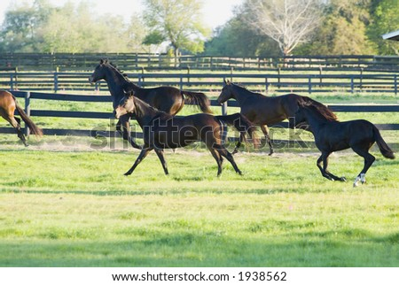 Beautiful Horses 82. See more in my portfolio - stock photo