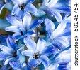 beautiful hyacinth, background texture, flowers - stock photo