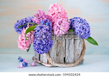 beautiful hyacinth flowers in a basket on a textural background