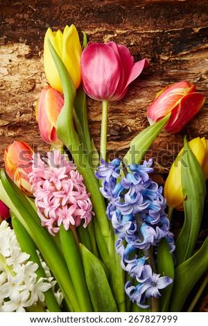 Beautiful hyacinths and tulips on bark tree background - stock photo
