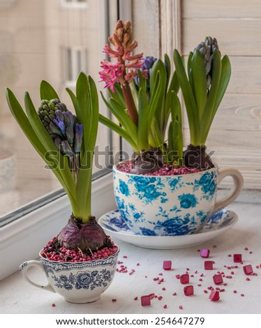 Beautiful hyacinths in a pots with a vintage pattern on the window - stock photo