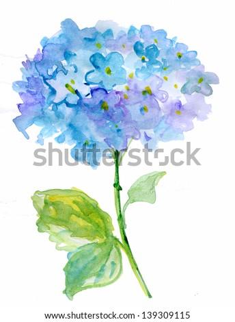 Beautiful Hydrangea blue flowers, watercolor illustration - stock photo