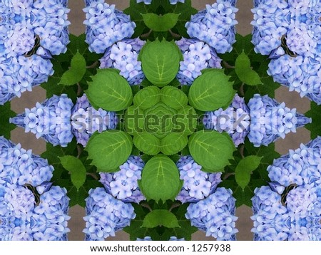 Beautiful hydrangeas kaleidoscope . Background for your summer or spring projects . - stock photo