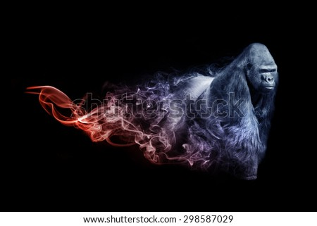 beautiful image of a gorilla.. animal kingdom. out of the smoke. wildlife picture. great  tattoo,zoo amazing wallpaper - stock photo