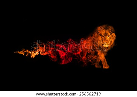 beautiful image of a great lion.. animal kingdom. . wildlife picture. great  tattoo. predator. amazing color effect. red and gold overlay in a dark background. lion king. african safari, zoo - stock photo