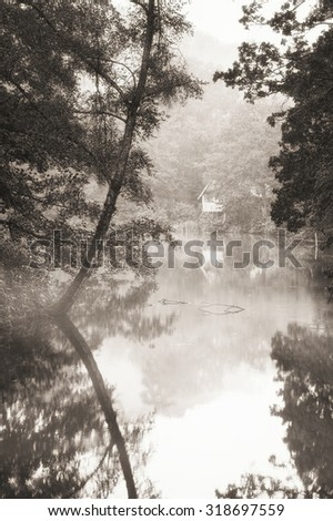 Beautiful image of Autumn Fall colors in nature of flora and foliage in black and white - stock photo