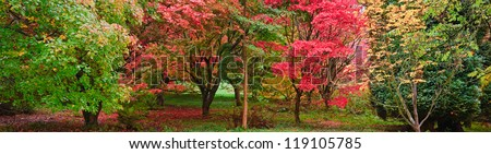 Beautiful image of Autumn Fall colors in nature wide forest panorama - stock photo