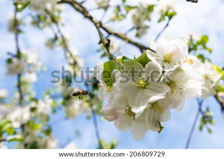 beautiful image of blossoming branches  - stock photo