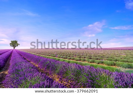 Beautiful image of lavender field Summer landscape - stock photo