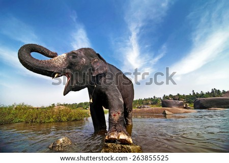 Beautiful Indian elephant is standing in the river. Picturesque clouds on the background. - stock photo
