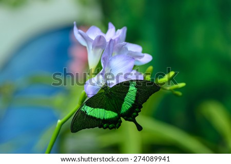beautiful insect butterfly on a flower on a colored background macro - stock photo