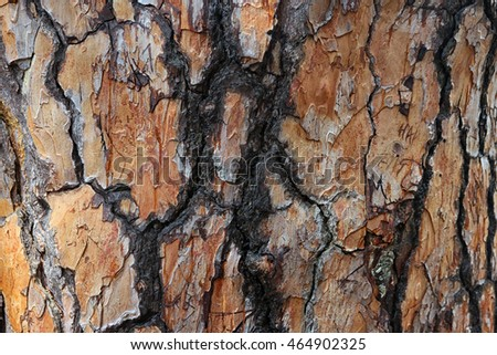 beautiful interesting texture of rough bumpy Crimean pine bark of pine tree foreground closeup