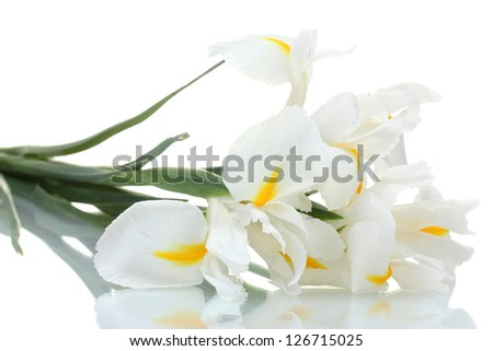 Beautiful irises isolated on white